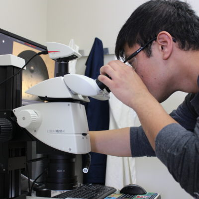 Student researcher looking through a microscope in a lab.